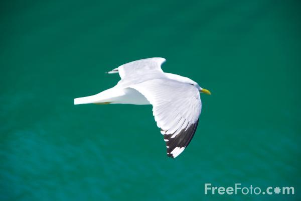 01_02_9---Seagull_web