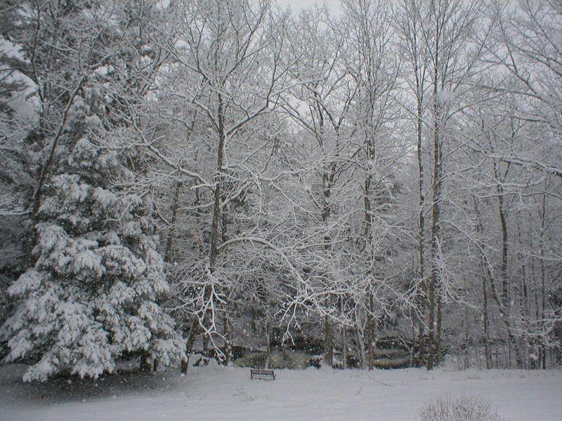 Backyard Winter 2