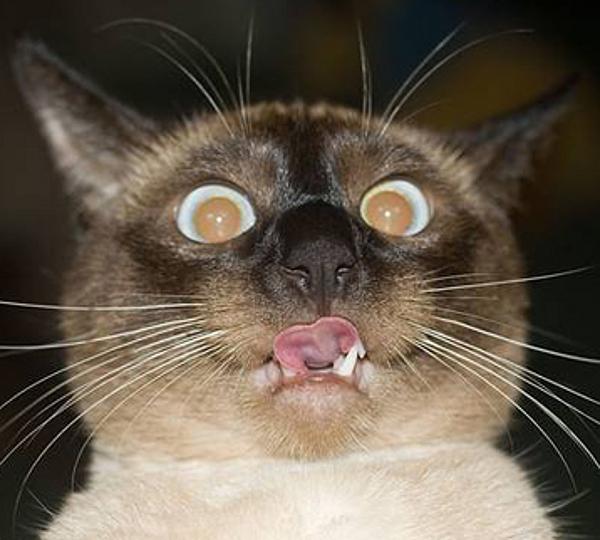 Cat-Picture-Crazy-Cat-Cats-4